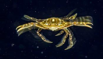 شنای خرچنگ در عکس روز نشنال جئوگرافیک +تصویر