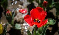 باغ گلها در بوستان چمران البرز +عکس