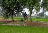 ممنوعیت کشت برنج در ۱۴استان تصمیمی عجولانه بود