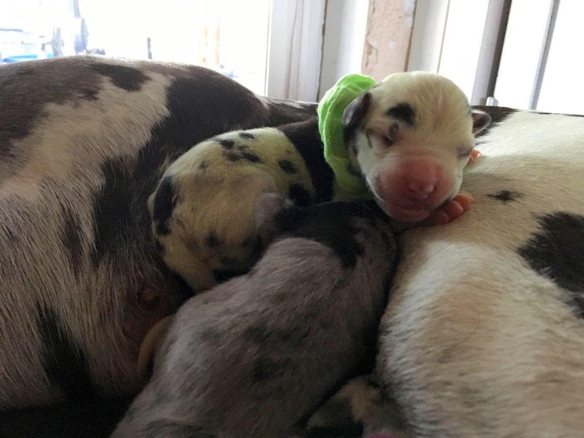 به دنیا آمدن توله سگ سبز رنگ +عکس