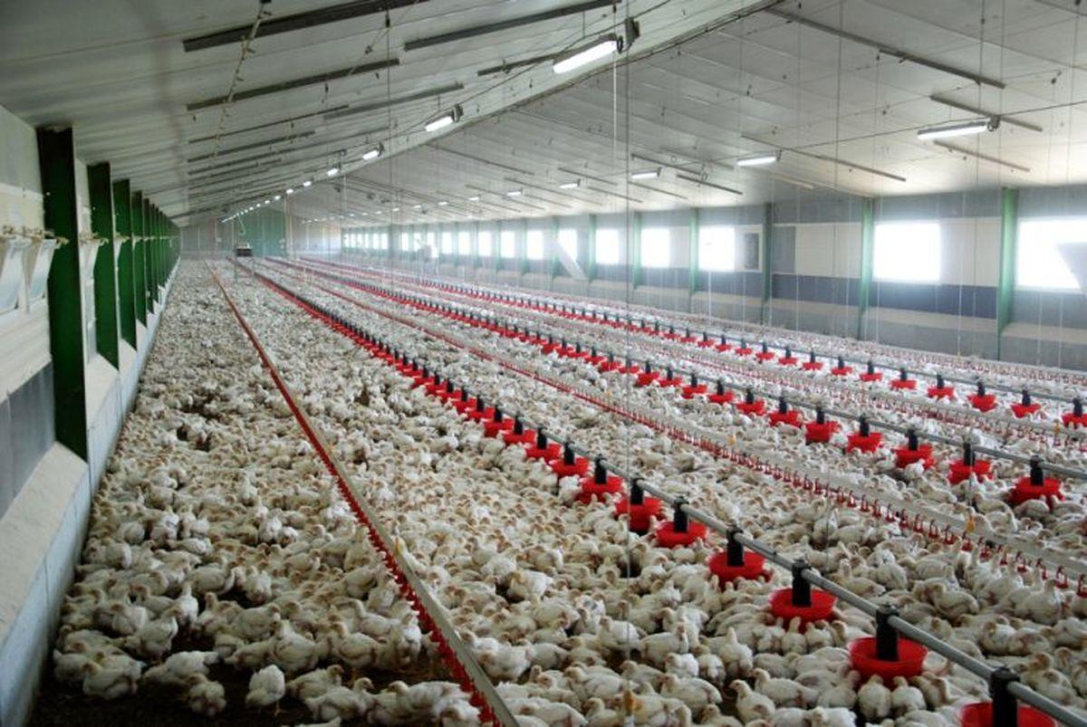 دلایل گرانی در بازار گوشت و مرغ