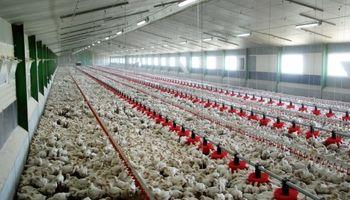 انتقال واحدهای تولید مرغ تخمگذار به مناطق غیر آلوده