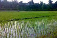 خرید ۶۰ هزار هکتار اراضی کشاورزی در بزریل
