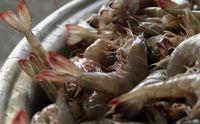 بازار فروش ماهی در بندرعباس +تصاویر