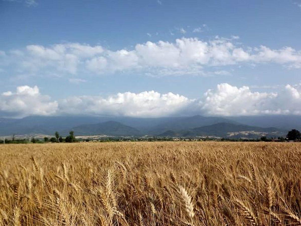 رشد اقتصادی ۱.۷درصدی بخش کشاورزی