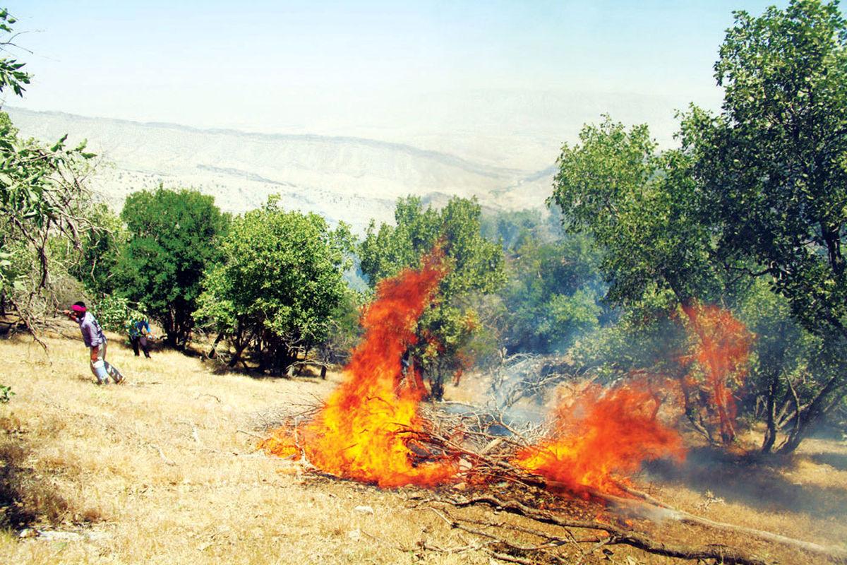 چرخه تخریب و زیان در جنگل های بلوط زاگرس