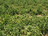پرمصرفترین و کممصرفترین محصولات کشاورزی از نظر