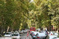 مرگ درختان پایتخت با چراغانیهای غیرکارشناسی