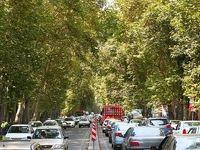 قطع درختان ولیعصر اشتباه است؟