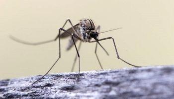چرا پشهها بعضی از افراد را بیشتر نیش میزنند؟
