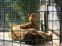 خانههای نا امن برای حیوانات