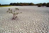 قرارگرفتن ۳منطقه کشور در وضعیت بحرانی کاملا خشک