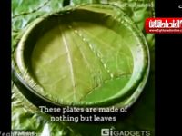 بشقابهای یک بار مصرف تولید شده از برگ درختان +فیلم