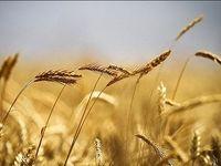 کیل مصرف انواع آرد مشخص شد +سند