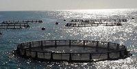 سازمان آب و برق خوزستان با تصمیمهای سلیقهای روند توسعه را قفل کرده است/ پرورش ماهی در قفس هیچ مشکل زیست محیطی ایجاد نخواهد کرد