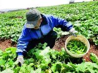 بورس کالا ابزار لازم برای هدفمند کردن یارانهها را داراست/ کشمش چهارمین محصول کشاورزی قابل عرضه