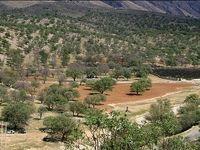 مدرسهای به وسعت جنگلهای بلوط