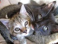 نوازش گربهها میتواند مرگبار باشد