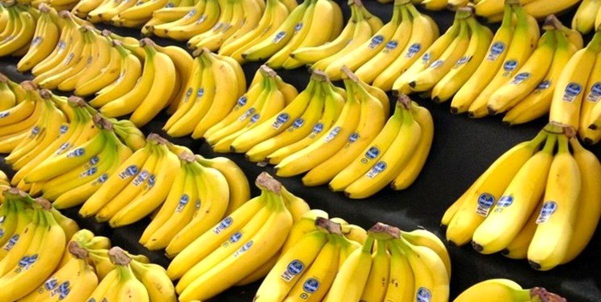 افزایش قیمت موز ارتباطی به واردات ندارد