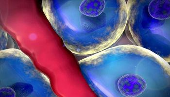شناسایی سلول جدیدی که کبد را بازسازی میکند