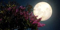 رخداد اولین پدیده ابر ماه صورتی در سال۲۰۲۰