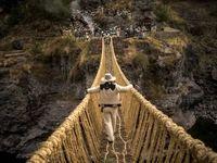 پل ۶۰۰سالهای که با علف ساخته میشود +تصاویر