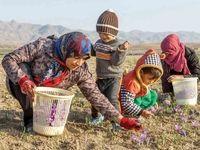 طلای سرخ در جیب روستاییان ایران
