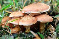 مسمومیت با قارچهای سمی در کودکان چه علائمی دارد؟