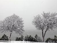 بارش برف در بزرگراه رشت - قزوین +فیلم