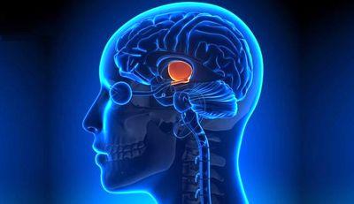 دلیل زندگی طولانی درون مغز کشف شد!