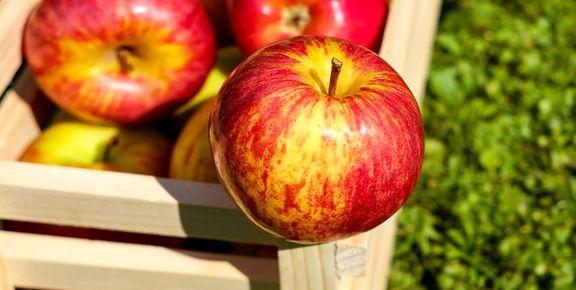 ۲۵هزار تن سیب درختی برای تنظیم بازار شب عید ذخیره شد