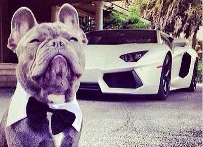 پولدارترین سگهای اینستاگرام! +تصاویر
