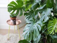 ۷گیاهی که به پاکسازی هوای خانه شما کمک میکند