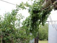 توفان و سیل در خلخال +تصاویر