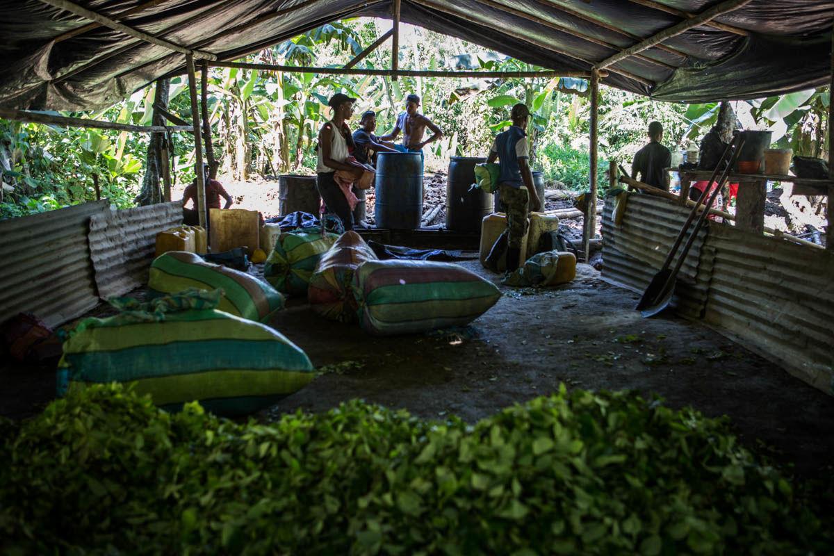 کشت غیرقانونی کوکائین در کلمبیا