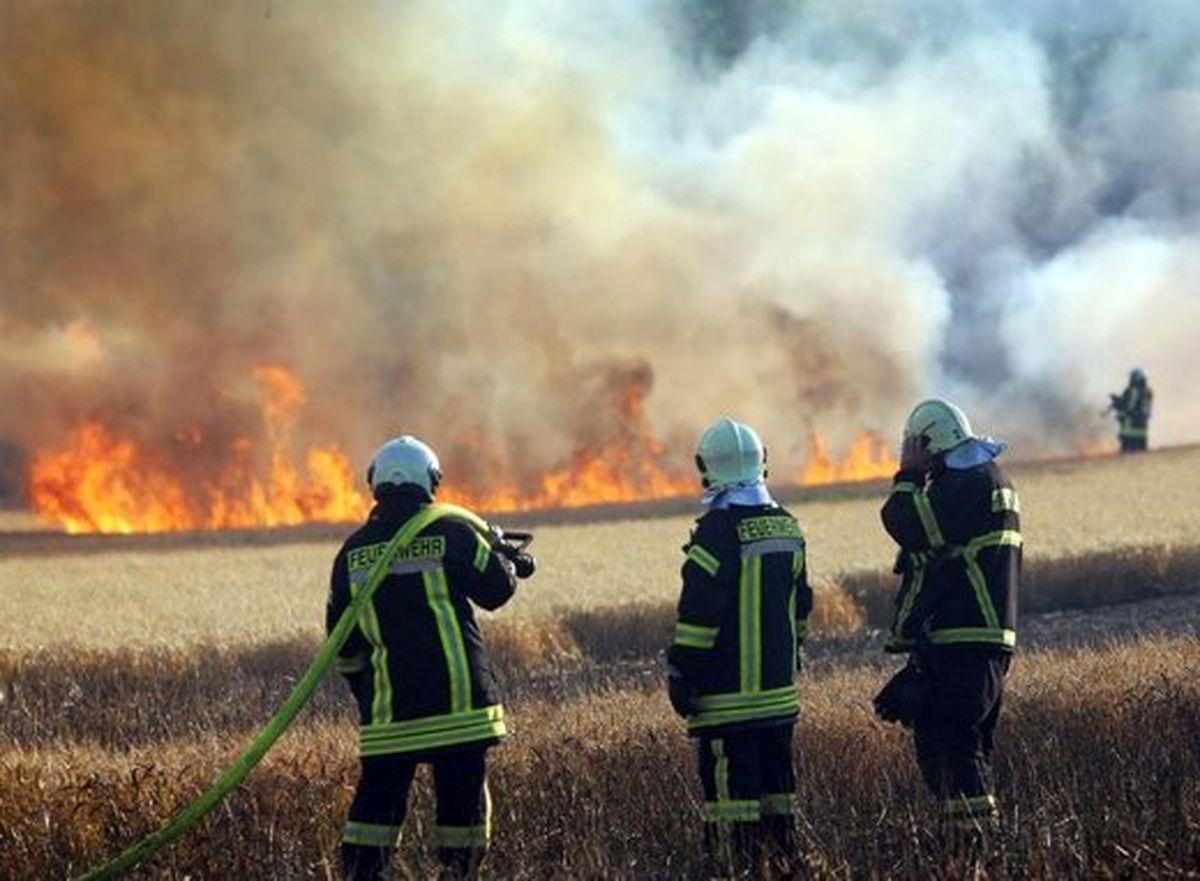 پارک پردیسان در آتش سوخت