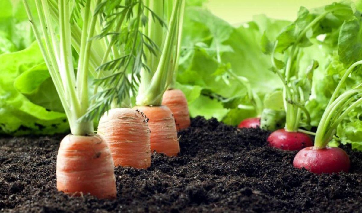 تولید سبزی و صیفی کشور به ۳۰میلیون تن در سال رسید