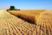 تعیین نادرست نرخ خرید تضمینی گندم زمینه واردات را فراهم میکند