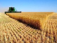خرید گندم از ۸میلیون تن گذشت