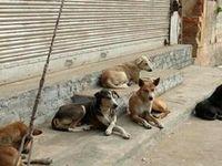 سگها بیماران کرونایی را شناسایی میکنند