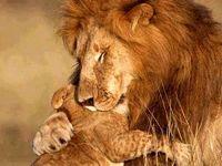 دنیای زیبای مادر و فرزندی حیوانات! +تصاویر