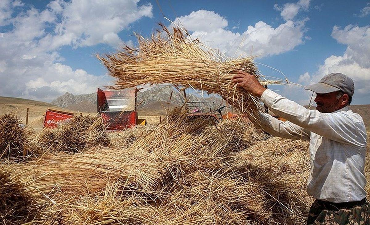 پیشبینی برداشت بیش از 14میلیون تن گندم از مزارع