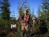 تجارت شکارچیان ماموت در سیبری +تصاویر