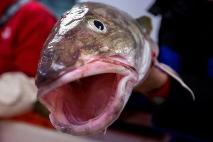 صنعت ماهیگیری در نروژ +عکس