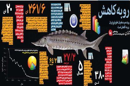 کاهش روند صید ماهیان خاویاری ایران +اینفوگرافیک