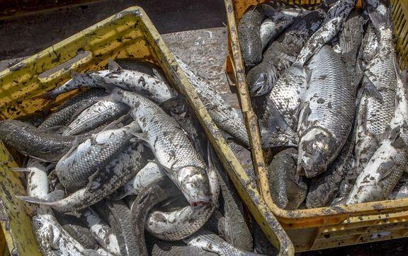 صید ماهی با برق فشار قوی