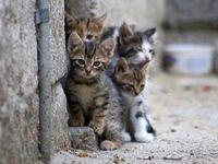 غذا دادن به سگ و گربههای شهری چه آثاری دارد؟/ دلسوزی از سر ناآگاهی!