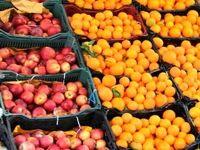 عرضه 70هزار تن سیب و پرتقال برای نوروز/ قیمت ها 12تا 17درصد پایین تر از بازار