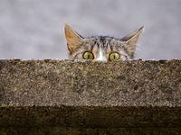 گربهای با ۲۰۰میلیون دلار ثروت!
