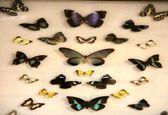 باغ موزه پروانهها اصفهان +عکس